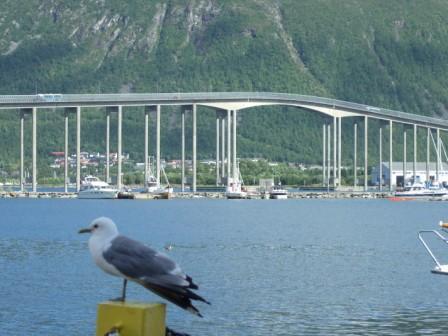 die Brücke verbindet Tromsøya mit dem Festland