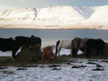 Typisch isländisch!